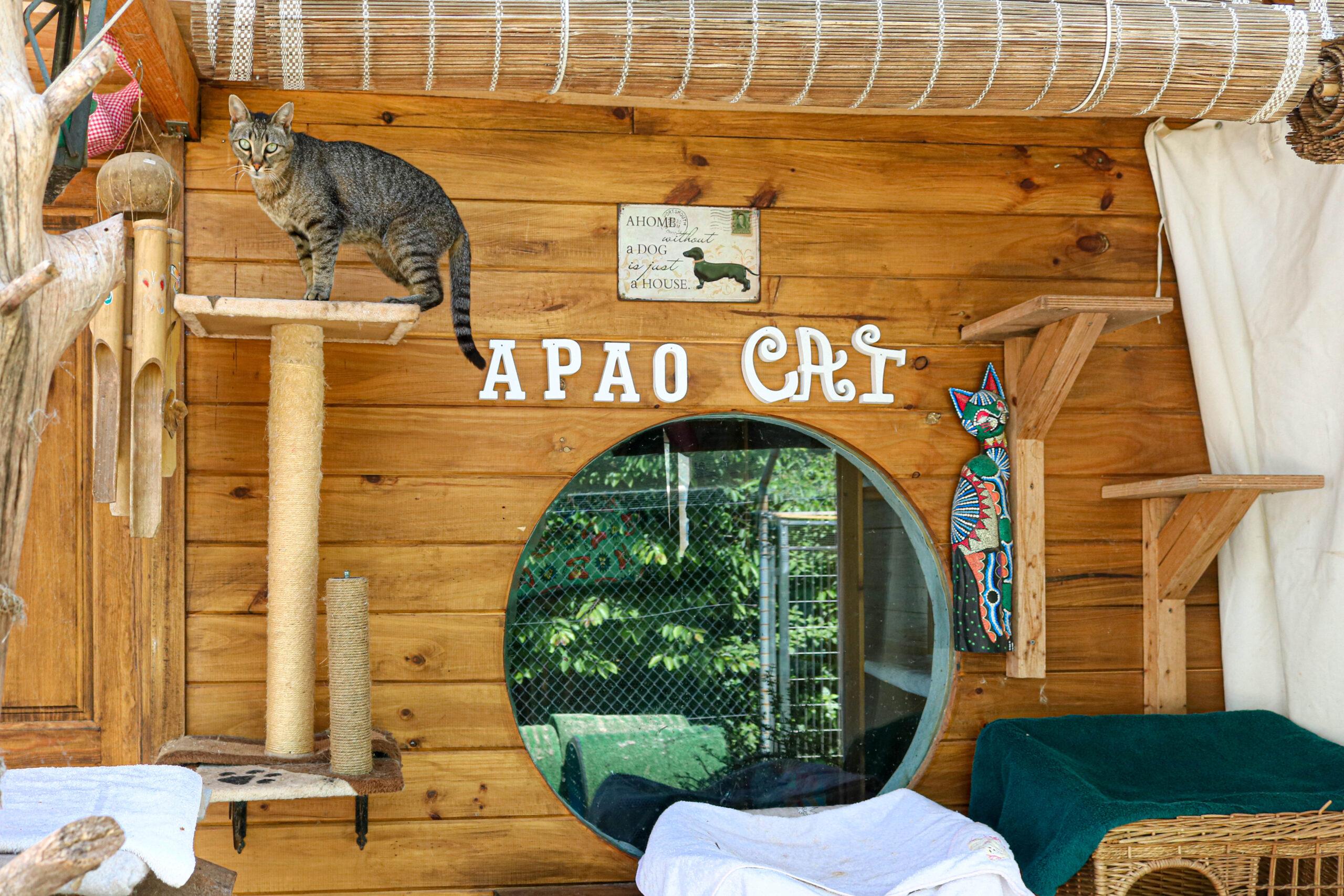 APAO CAT